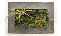 Succulent Picture Frame Workshop