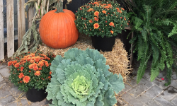 Fall Porch Package - Pre Order