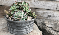 Trendy Succulent Tin Planter