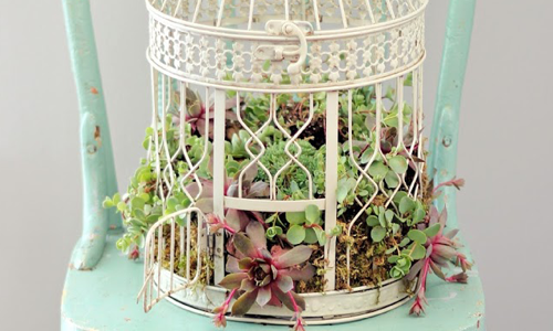 Succulent Birdcage Workshop