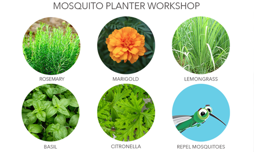 Mosquito Planter Workshop