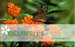 Give the gift of a Gemmell's Garden Centre Gift Card