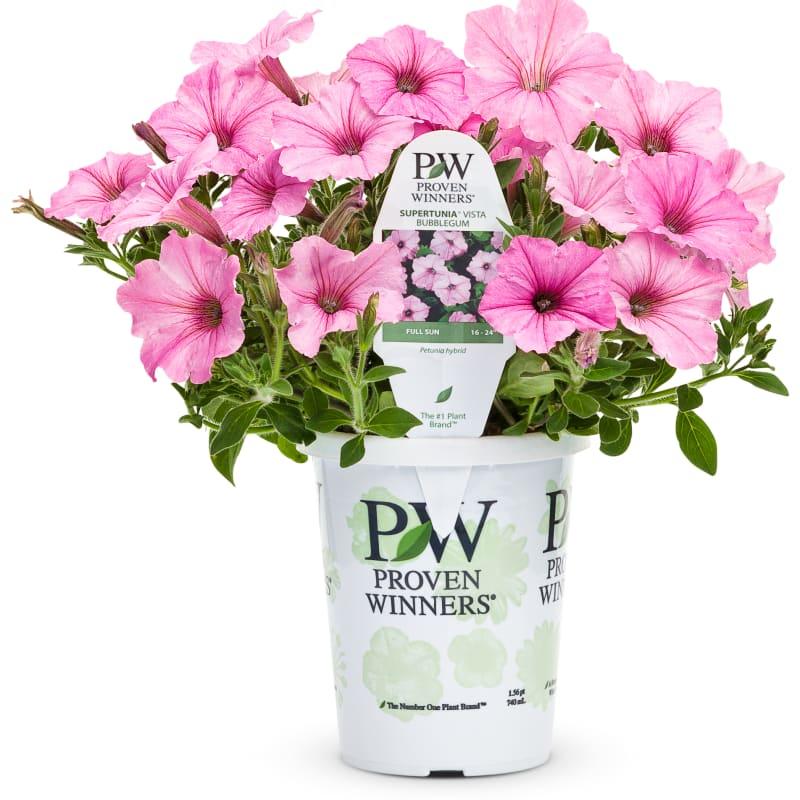 Proven Winners® Petunia Supertunia®