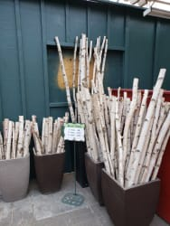 Birch Poles | Asst'd Lengths