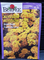 Alyssum | Gold Dust (Burpee)