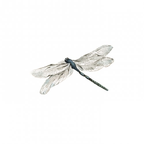 Dragonfly - Reproduction Watercolour
